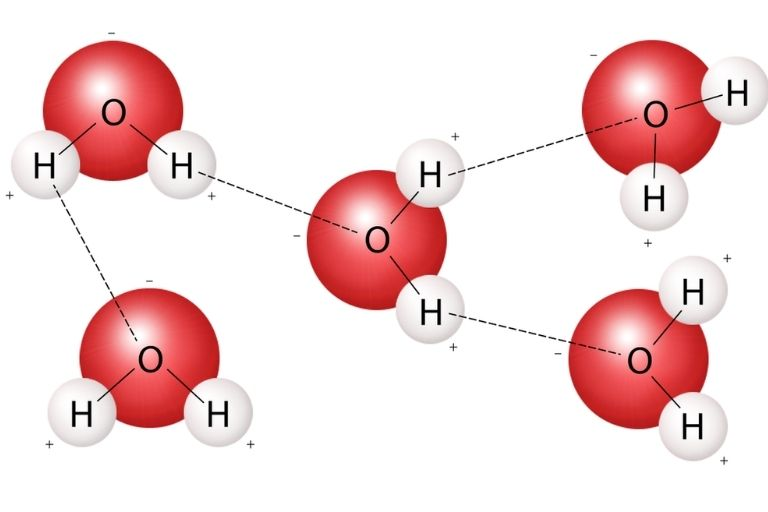 Water Molecules Bond